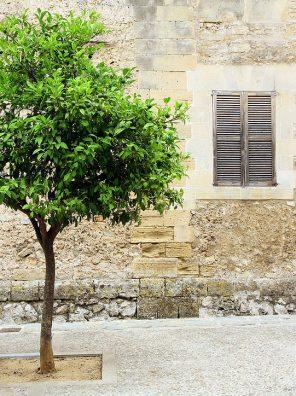 شجرة الليمون البنزهير