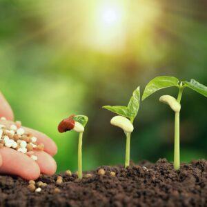 الاسمدة و التربة