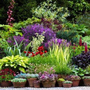 نباتات خارجية